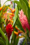 Red Ginger Flowers, Seafront Market