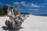 Town Beach Driftwood in Ghisonaccia