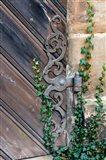 Rose Garden in Bamberg, Germany