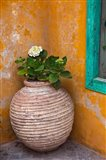 Flower in pot, Crete, Greece