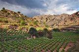 Vineyard, Crete, Greece