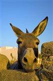 Greece, Mykonos, Hora, Donkey and Stone Fence