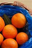 Basket of Oranges, Greece