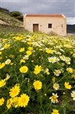 Wildflowers and church of St, Island of Spinalonga, Crete, Greece