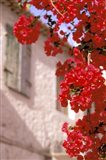 Red Flowers on Main Street, Kardamyli, Messina, Peloponnese, Greece