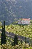 Hillside Vineyard, Manolates, Samos, Aegean Islands, Greece