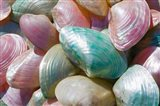 Greece, Dodecanese, Rhodes, Harbor, Seashells
