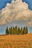 Italy, Tuscany Cypress Tree Grove And Towering Cloud Formation