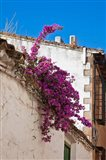 Spain, Andalusia, Banos de la Encina Bougainvillea Growing on a Roof