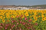 Spain, Andalusia, Bornos Sunflower Fields