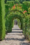 Archway of trees in the gardens of the Alhambra, Granada, Spain