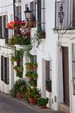 Spain, Andalucia Region, Cadiz, Grazalema Potted plants by a home