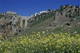 Wildflowers in El Tajo Gorge and Punte Nuevo, Ronda, Spain