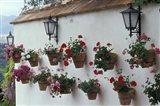 Geraniums along White Wall of Palacio de Mondragon, Ronda, Spain