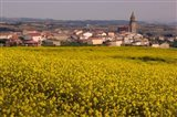Yellow mustard flowers, Elvillar Village, La Rioja, Spain