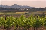 Spring Vineyards with Montserrat Mountain, Catalonia, Spain