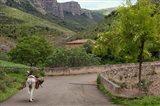 Old man rides a donkey loaded with wood, Anguiano, La Rioja, Spain