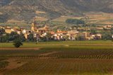 Village of Brinas surrounded by Vineyards, La Rioja Region, Spain