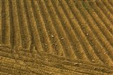 Tilled Ground Ready for Planting, Brinas, La Rioja, Spain
