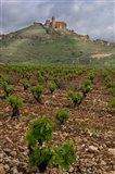 Vineyard in stony soil with San Vicente de la Sonsierra Village, La Rioja, Spain