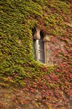 Ivy-Covered Wall, Ciudad Monumental, Caceres, Spain