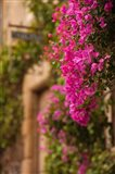 Flower-covered Buildings, Old Town, Ciudad Monumental, Caceres, Spain