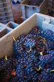 Bodega Marques de Riscal Winery, Elciego, Basque Country, Spain