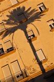 Spain, Cadiz, Campo del Sur, Palm Shadow