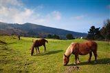 Horses By Jaizkibel Road, Hondarribia, Spain