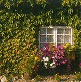 Cottage, Devon, England