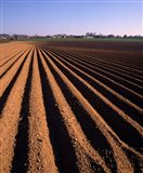 Ploughed Field, Surrey, England