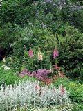 Nash Garden, St James Park, London, England