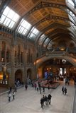 England, London, Natural History Museum Great Hall