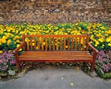 England, Northumberland, Hexham, Park bench