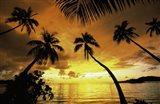 Sunset with palms Fiji