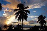 Palm Silhouettes at Sunset, Taveuni,  Fiji