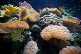 Salt Water Aquarium, Vitu Levu, Fiji