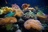 Salt Water Aquarium in Vitu Levu, Fiji