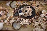 Sea Shells, Fiji