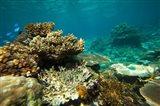 Rainbow Reef, Fiji