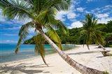 Beach and Palms, Waitatavi Bay, Vanua Levu, Fiji