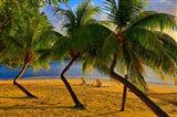 Palm Trees, Matangi Private Island Resort, Fiji
