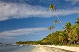Beach and palm trees, Plantation Island Resort, Fiji
