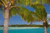 Palm trees and lagoon entrance, Musket Cove Island Resort, Malolo Lailai Island, Mamanuca Islands, Fiji