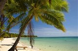 Beach and palm trees, Plantation Island Resort, Mamanuca Islands, Fiji