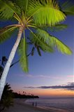 Palm trees and sunset, Plantation Island Resort, Fiji