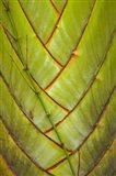 Palm flora, Coral Coast, Viti Levu, Fiji