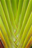 Palm frond pattern, Coral Coast,  Fiji