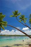 Palm trees, Shangri-La Fijian Resort, Yanuca Island, Coral Coast, Viti Levu, Fiji