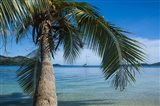 Palm tree over clear waters around Nanuya Lailai Island, Blue Lagoon, Yasawa, Fiji, South Pacific